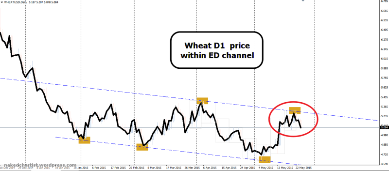week22 Wheat D1 Ed channel top 260515